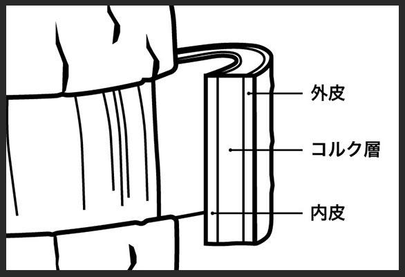 コルクガシの皮の解説イラスト